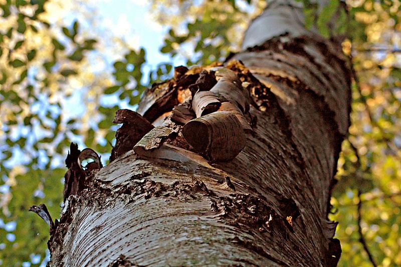 Holz und die fuenf Elemente
